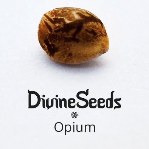 Купить семена Opium