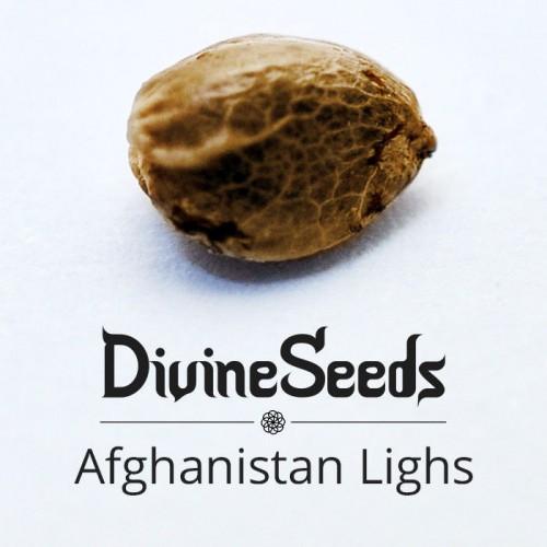Купить семена Afghanistan Lights