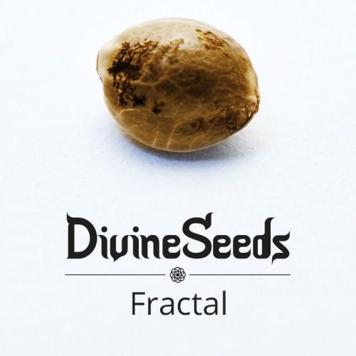 Купить семена Fractal