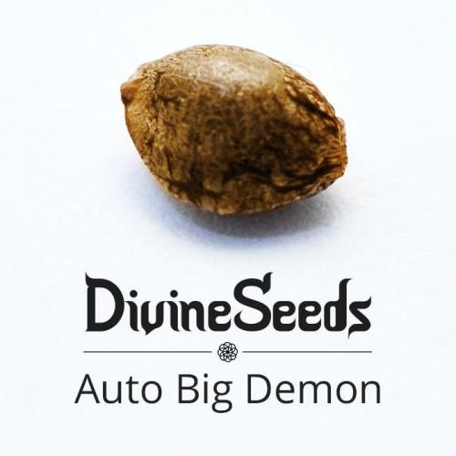 Купить семена Auto Big Demon