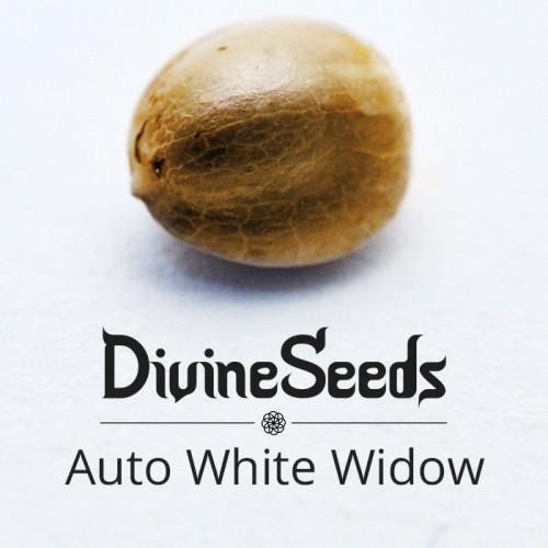 Купить семена Auto White Widow