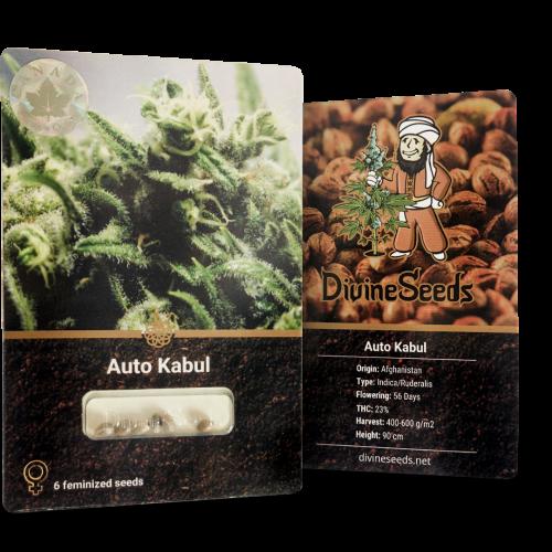 Купить семена Auto Kabul