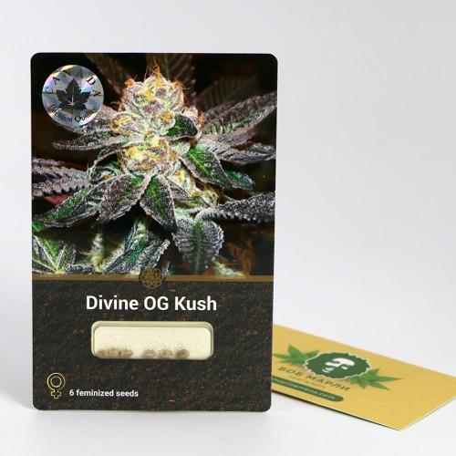 Купить семена Divine OG Kush